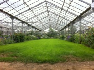 The Glasshouse at Ballymaloe School