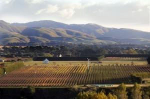 Escarpment vineyard