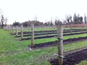 A vineyard project in East Cork
